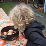 Eieren rapen