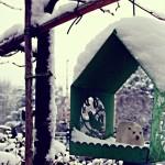 Sneeuwdieren
