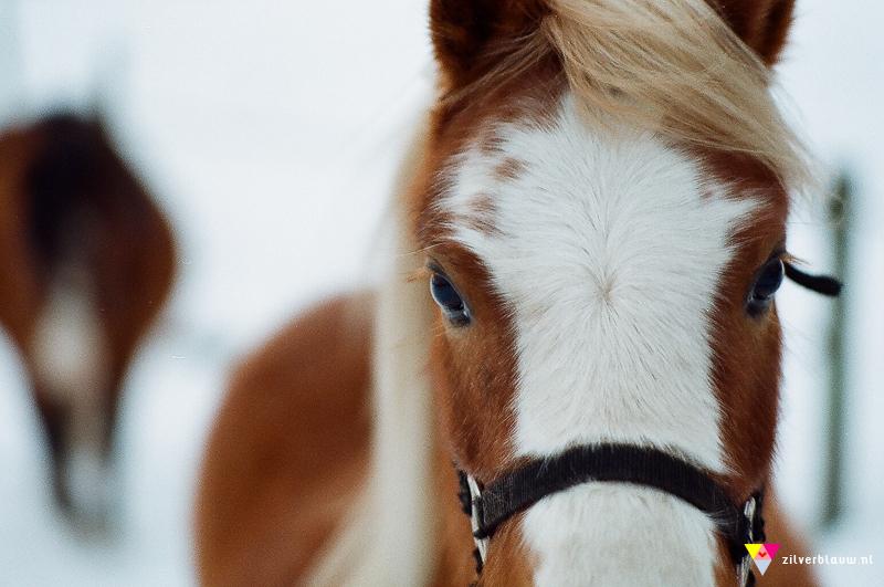 paardje close-up Nikon FE