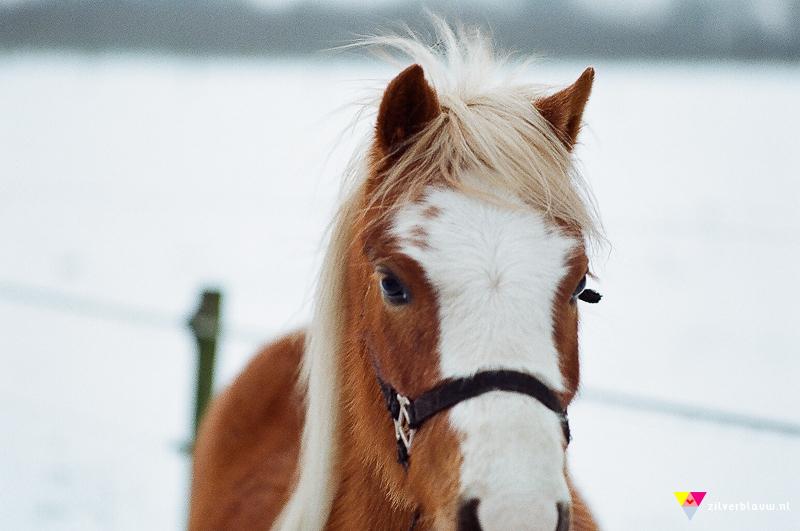 paardje in de sneeuw