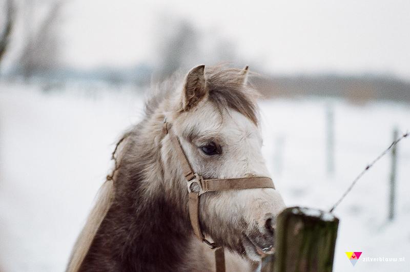 paardje in de sneeuw 2