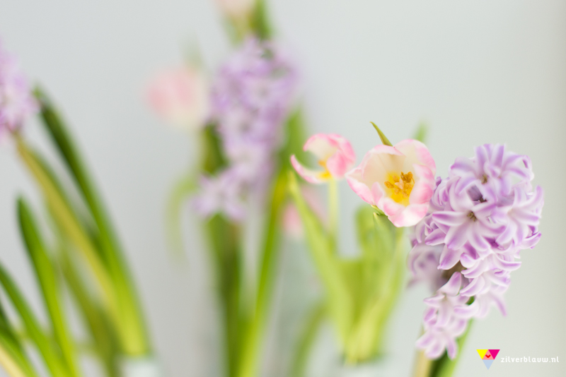 tulpen en hyacinten
