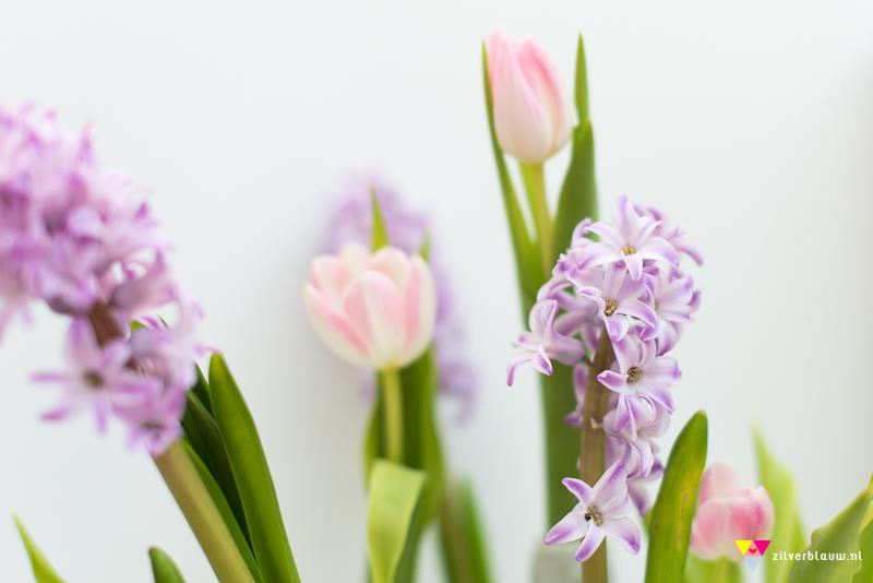 tulpen en hyacinten 2