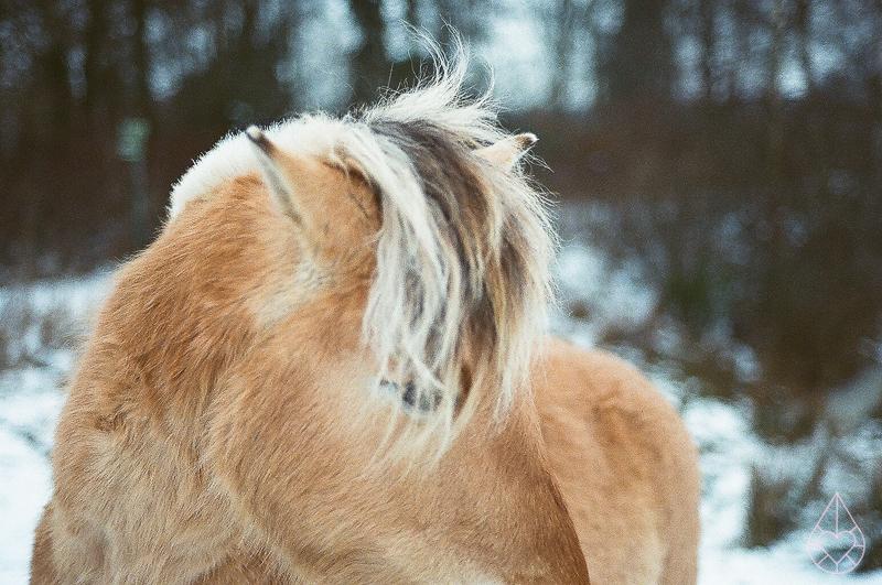 paardje - Nikon FE