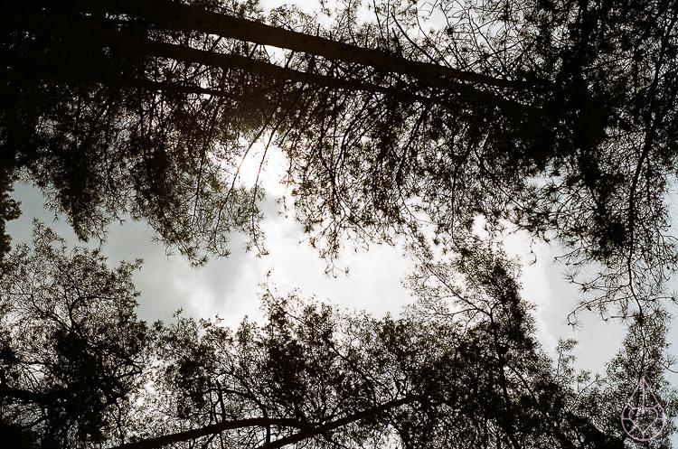 bomen Nikon FE