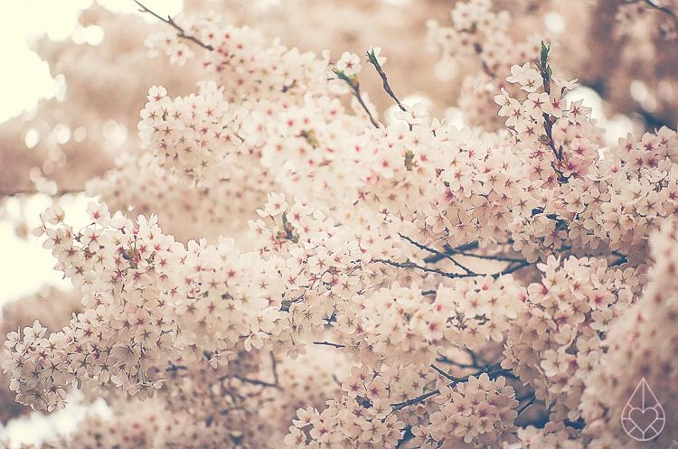 blossom on film
