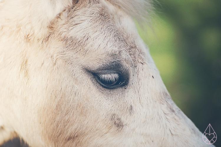 horses Kodak Ektar