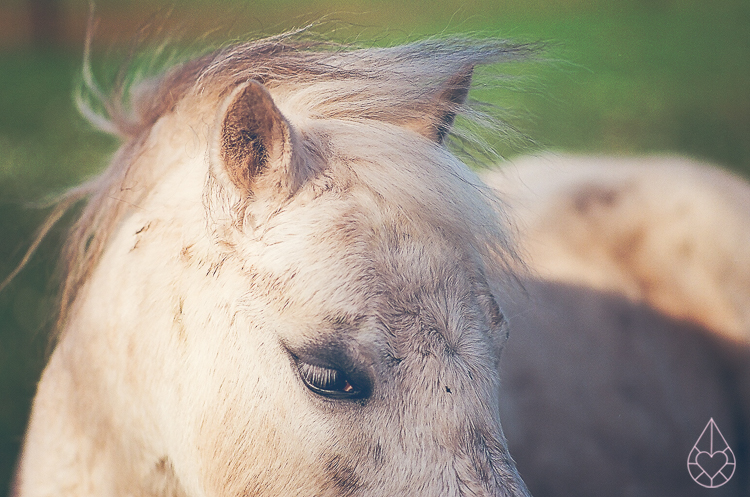 paarden analoog