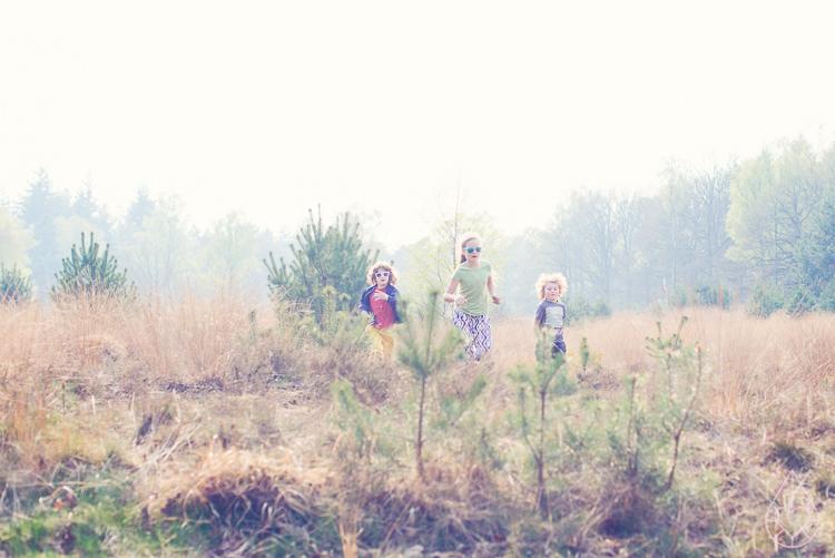 het bos in