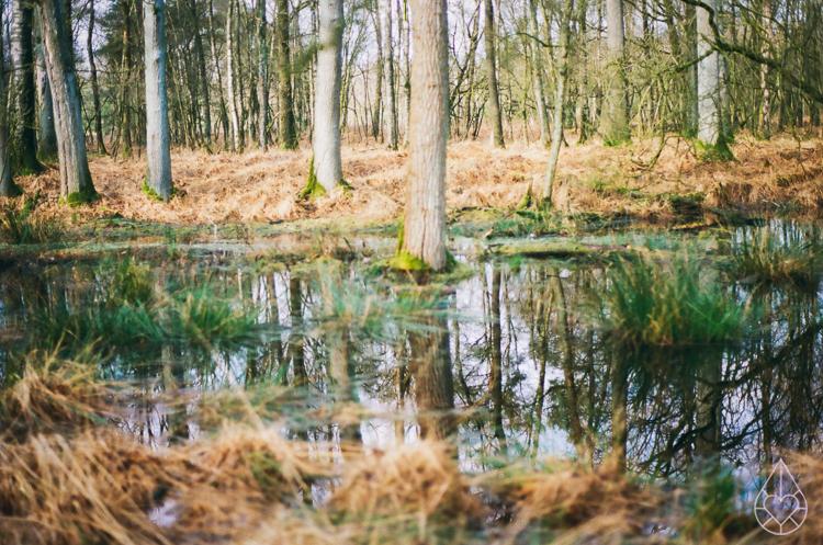 winter, nikon FE, by zilverblauw.nl