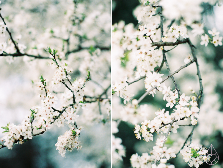 Spring, Nikon FM3A, by zilverblauw.nl