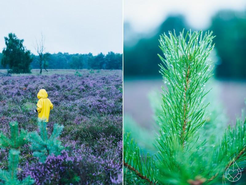 Heide op de Kampina, by zilverblauw.nl