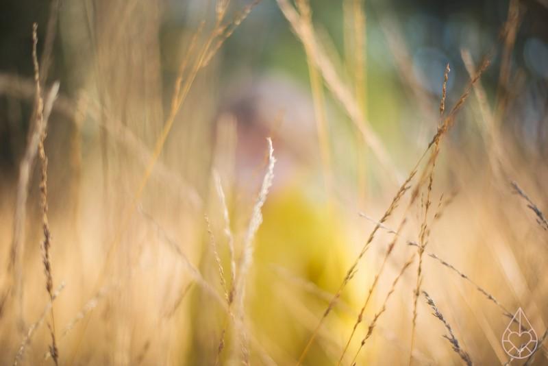 Golden Mus, by zilverblauw