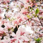 Spring on film