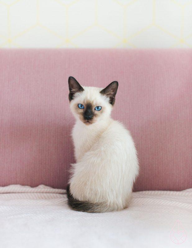 drukke kitten