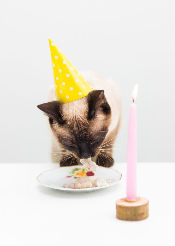 birthday Pjoes zilverblauw.nl