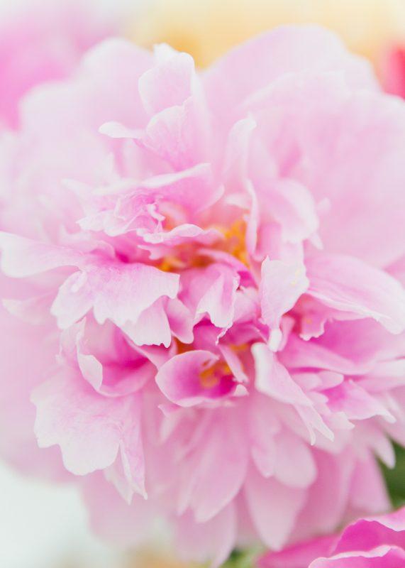bloemenbureau pioenroos
