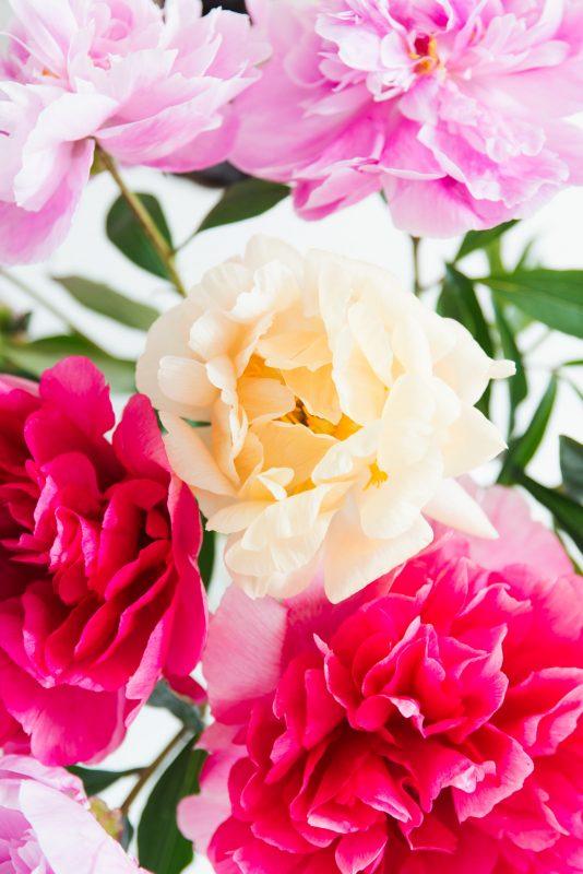 bloem van de maand juni