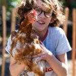 Onze nieuwe kippen