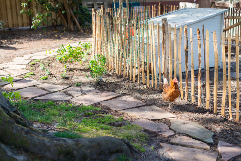 kippenren en flagstones