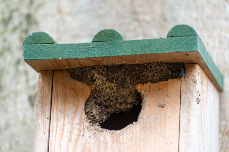 nest boomklever