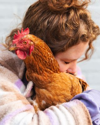 'Saving one animal doesn't change the whole world, but the whole world changes for this one animal'   Just over a year ago, we adopted four former laying hens @redeenlegkip. I'm not exaggerating when I say this adoption changed my whole perspective on life. Seeing how scared, hurt and mistreated the hens were when we adopted them was heartbreaking, but their resilience and ability to regain their faith in humanity might broke my heart even more. Pictured here is DikTok, I'm proud to call her my friend. ♥️  (Quote by @moustache_farmer, a true hero worth following)